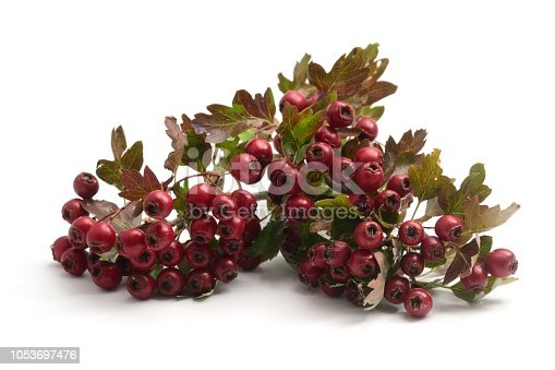 Hawthorn berries isolated on a white background.