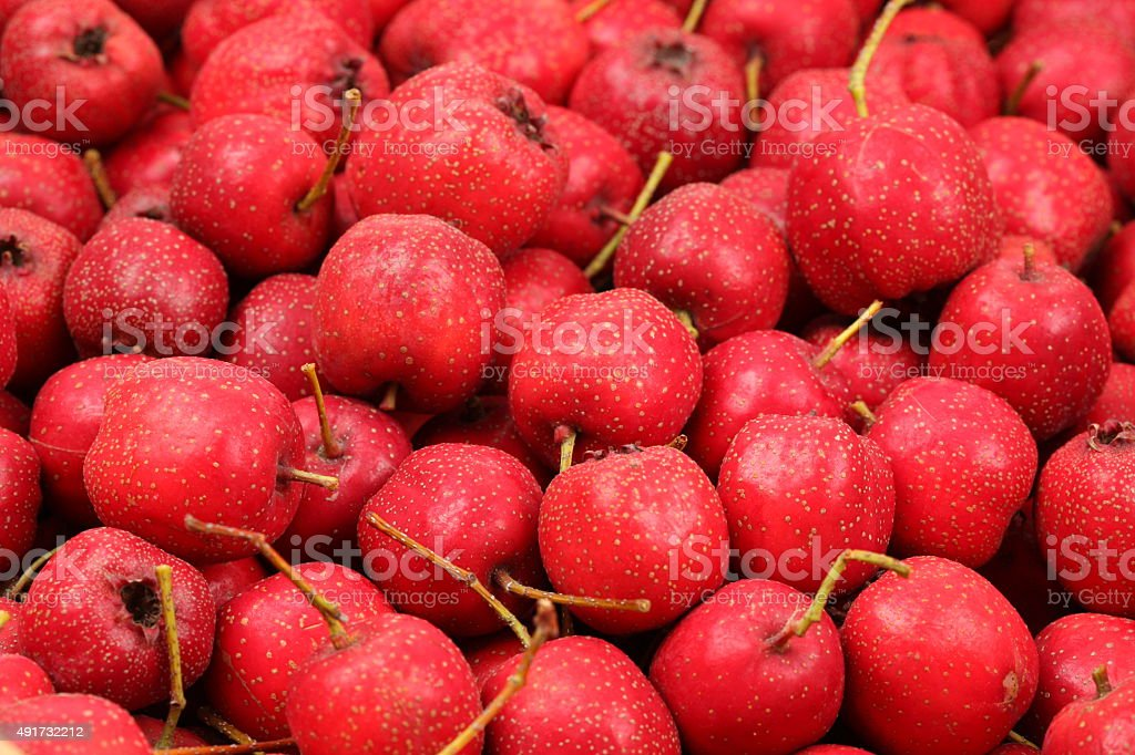 Hawthorn berry stock photo