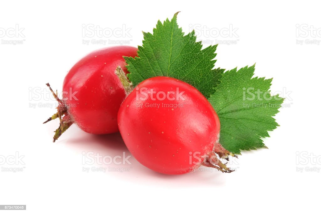 Hawthorn berry with leaf isolated on white background close-up stock photo