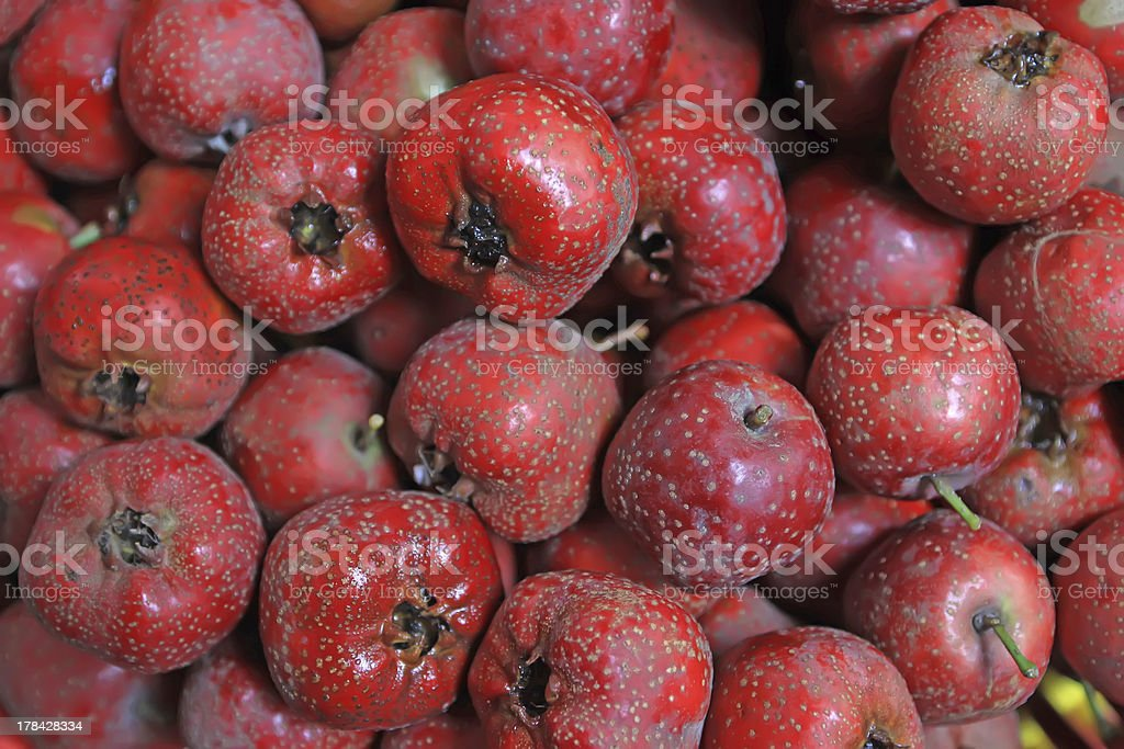 hawthorn fruit royalty-free stock photo
