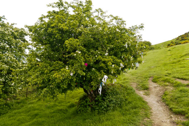 Hawthorn Tree with Offerings stock photo