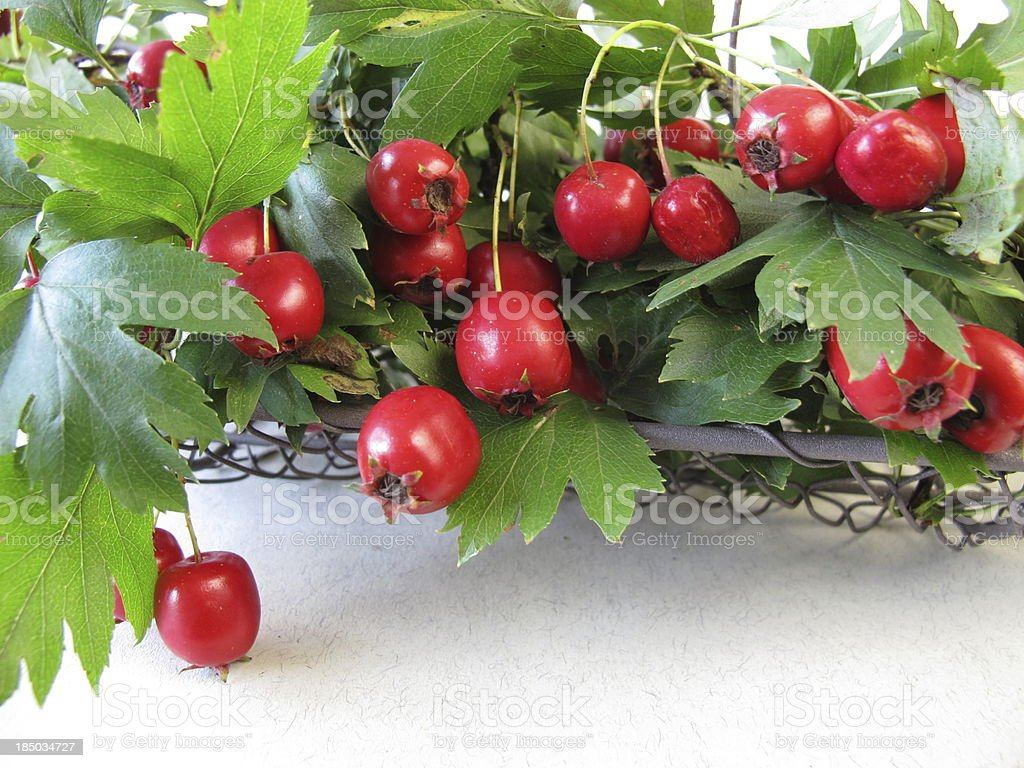 Hawthorn twigs with fruits stock photo