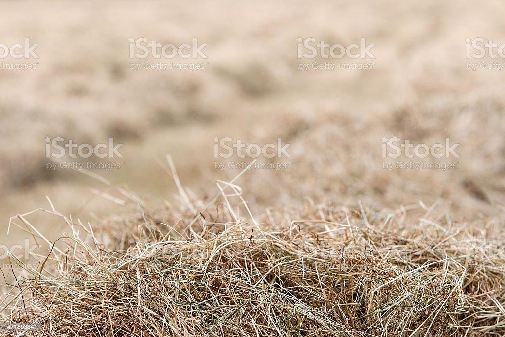 Hay Background royalty-free stock photo