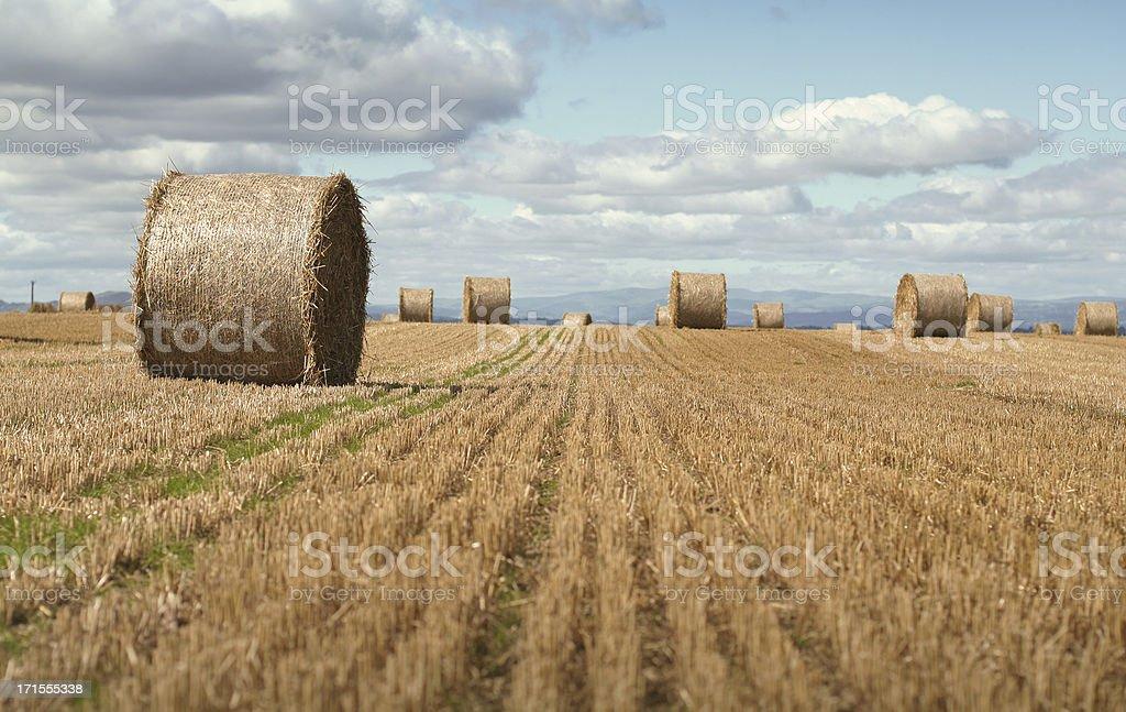 hay bail field royalty-free stock photo
