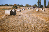 Hay bail harvesting in wonderful autumn farmers field landscape with hay stacks after cropping and golden ripening wheat field