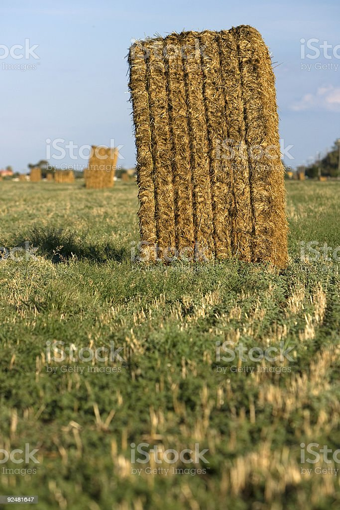 Hay bails in a field, Victoria, Australia royalty-free stock photo