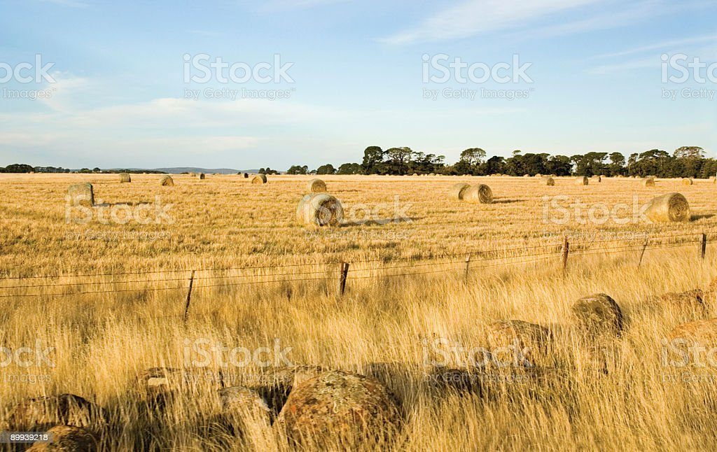 Hay Bails on the Paddock stock photo