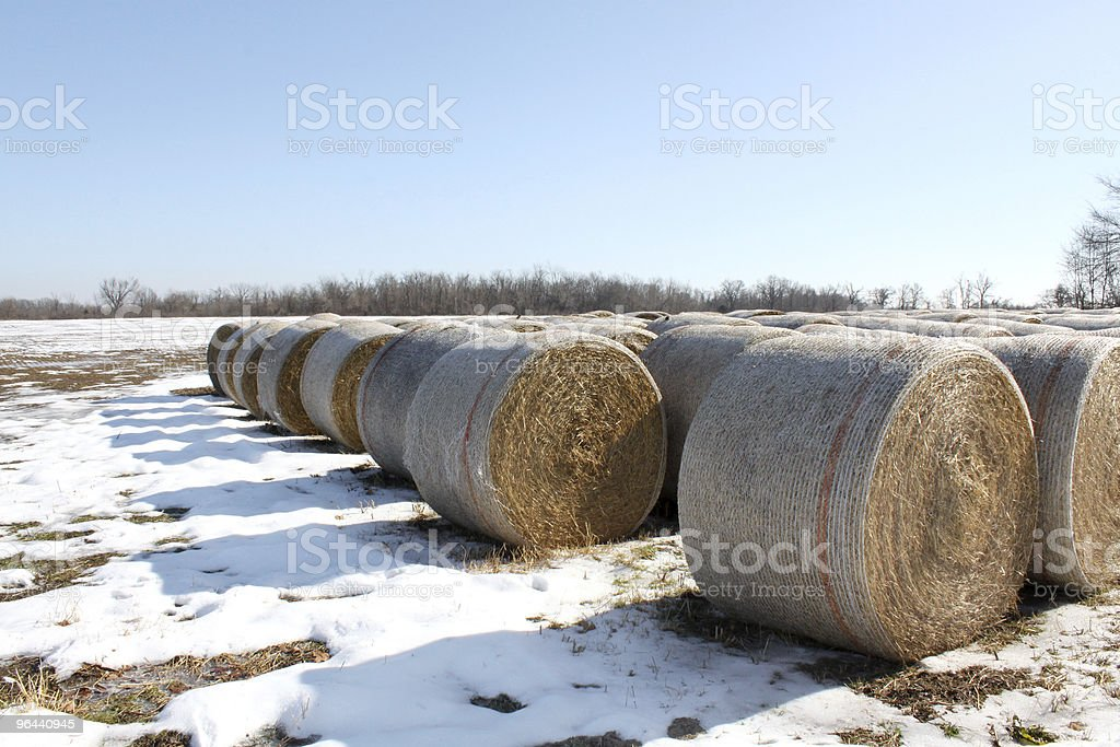 Hay bails with snow - Royalty-free Agricultural Field Stock Photo