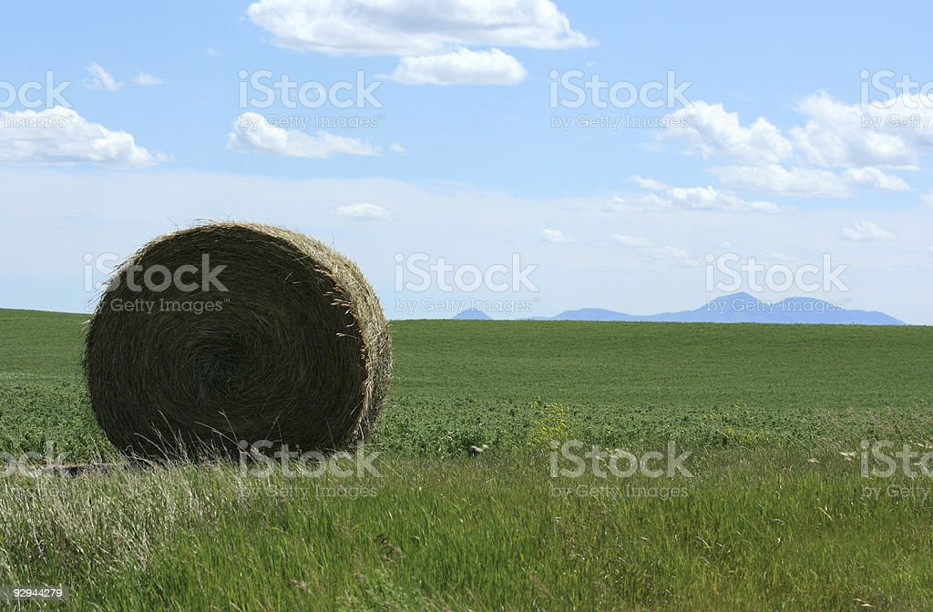 Hay Bale and Sweetgrass Hills stock photo
