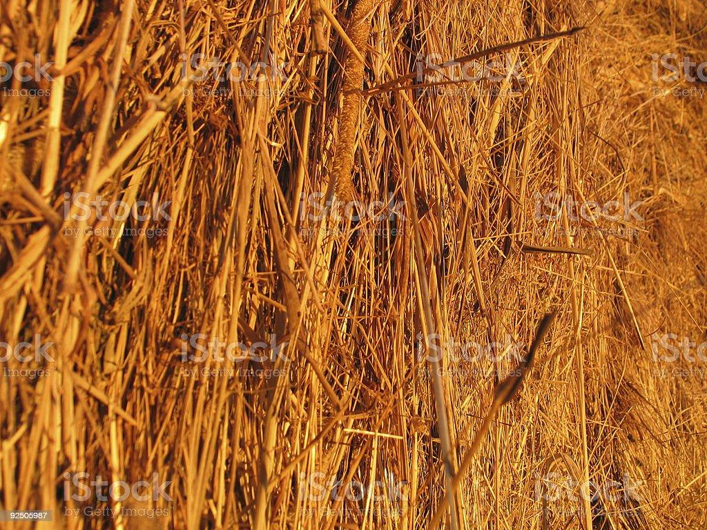 Hay Bale - Closeup royalty-free stock photo