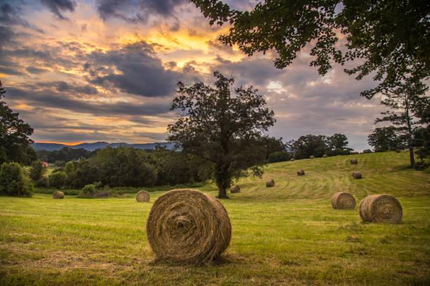 Hay bale harvest on the farm stock photo