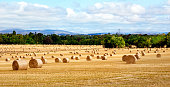 Hay bale harvesting in big golden field landscape panoramic