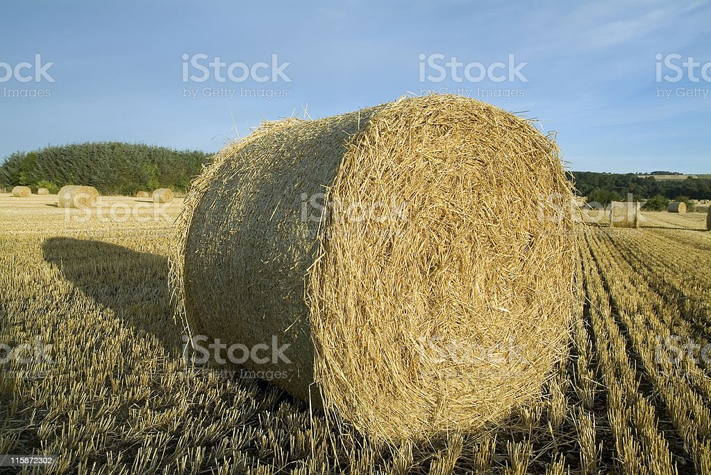 Hay bale in early morning light close up royalty-free stock photo