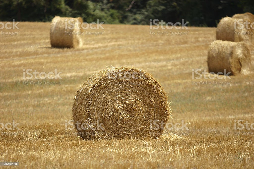 Hay Bale  in Tuscany royalty-free stock photo