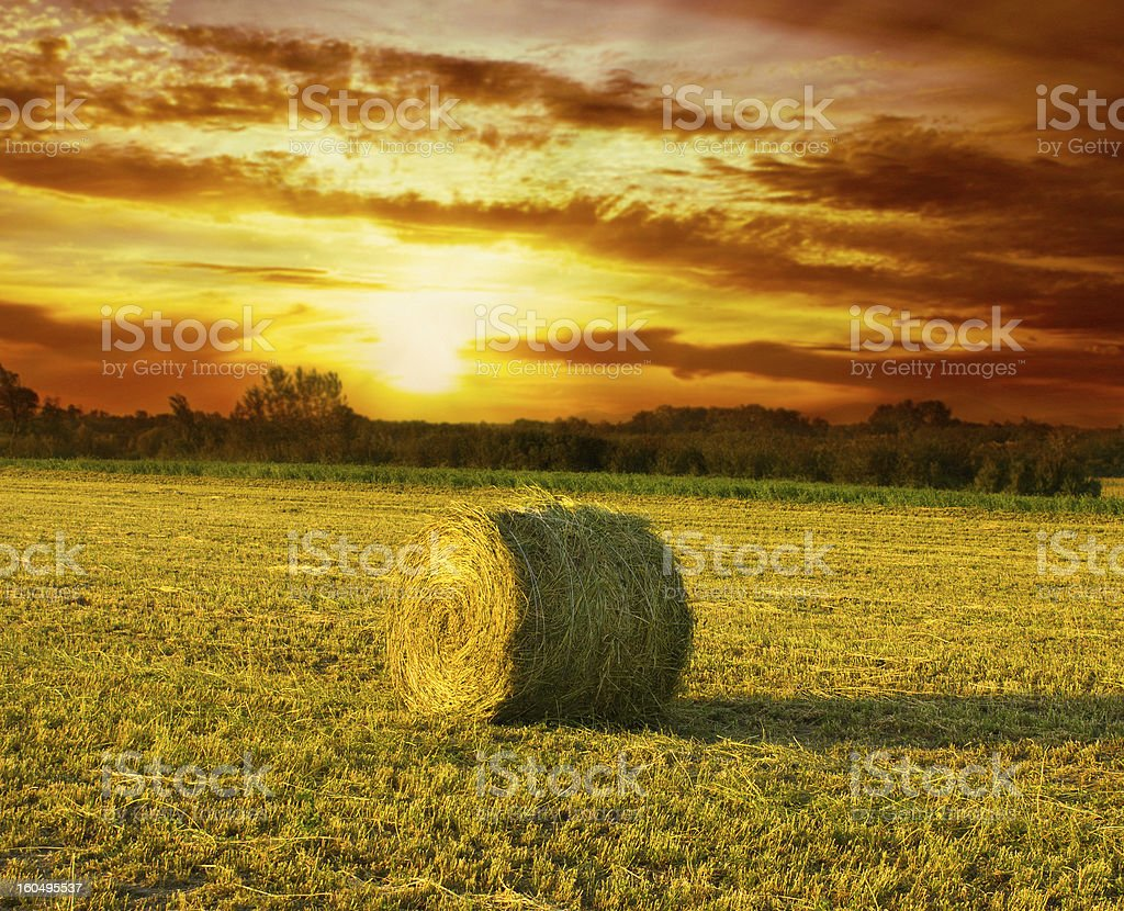Hay Bale on the field at sunset royalty-free stock photo