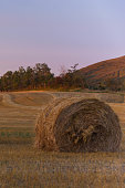 Hay bales sitting in the wheat field in the early morning of fall.