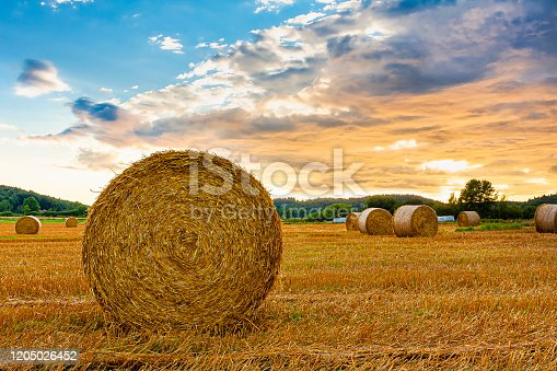 Hay bale rolled in sunset evening