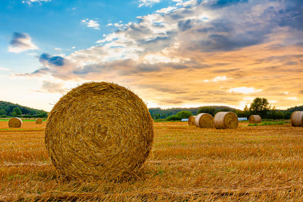 Hay bale sunset stock photo