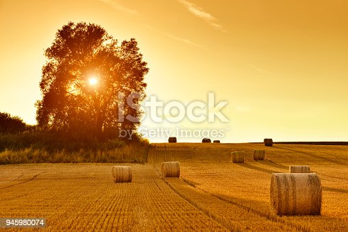 Hay bales and field stubble in golden sunset.