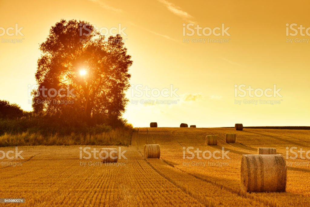 Hay Bales and Field Stubble in Golden Sunset stock photo