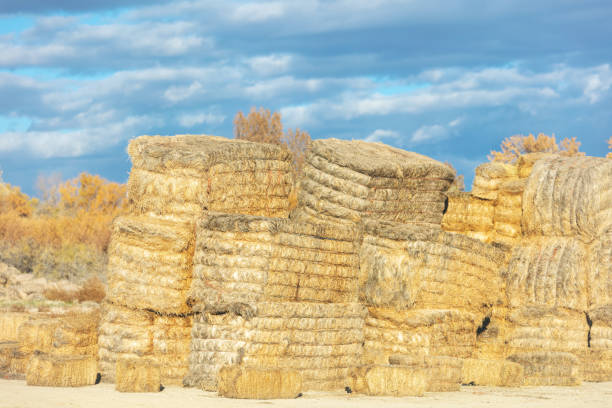 Hay Bales and Stacks Rural Backgrounds and Surfaces and Outdoor Textures Western Colorado stock photo