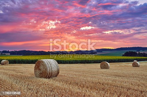 Hay bales and sunflower farm reflection sunset pink sky.