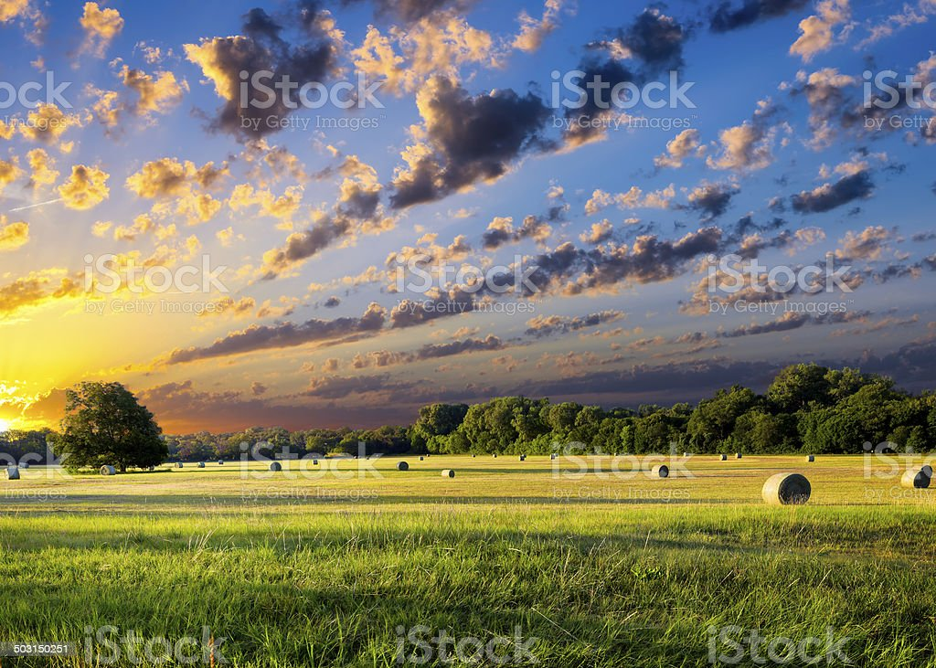 Hay Bales at Sunrise stock photo