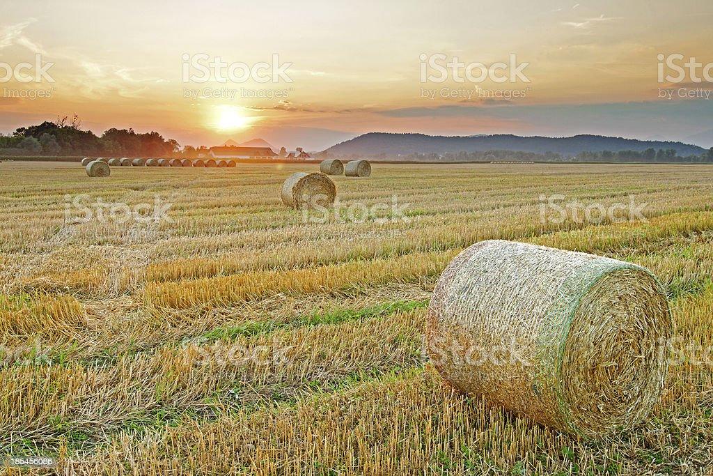 Hay bales at Sunset stock photo