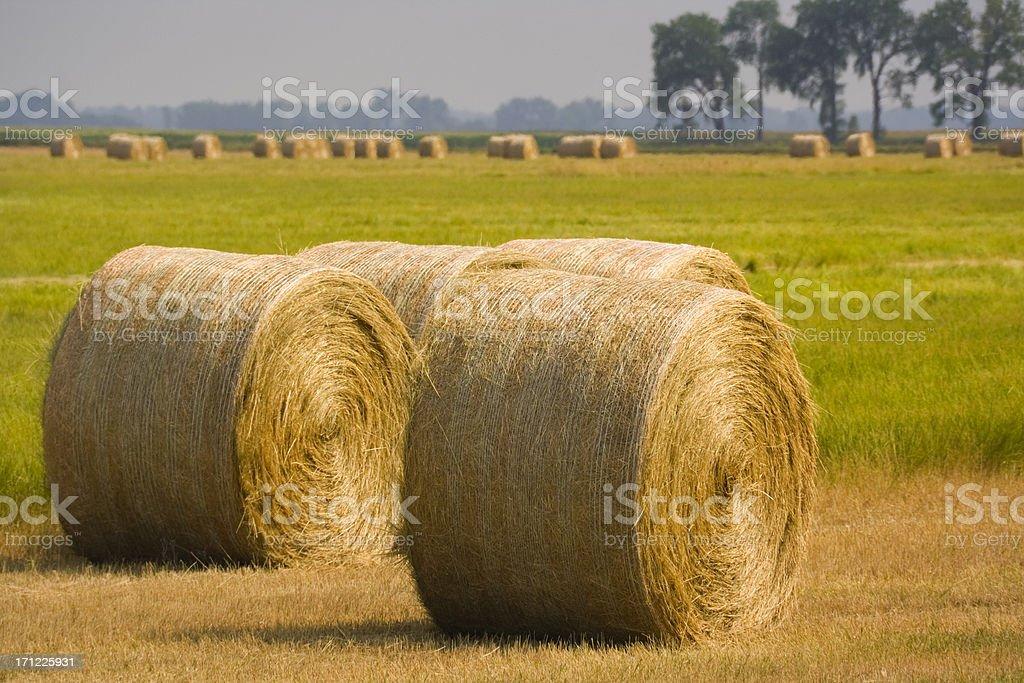 Hay Bales Harvest Hz stock photo