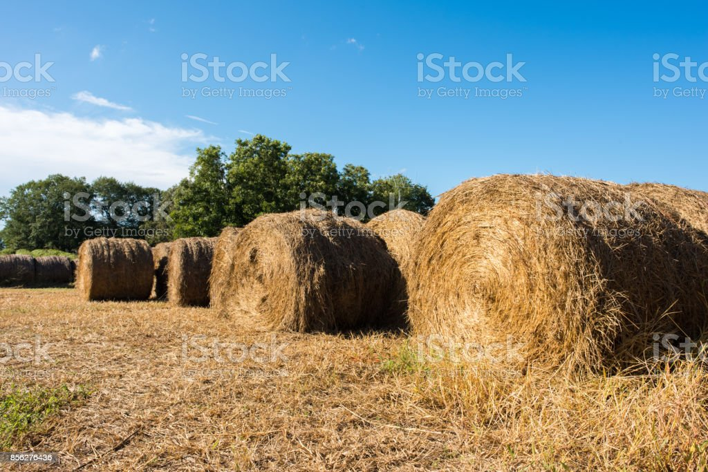 Hay bales in a pasture Close up of hay bale in a pasture in the rural area of Inman, South Carolina. Agricultural Field Stock Photo