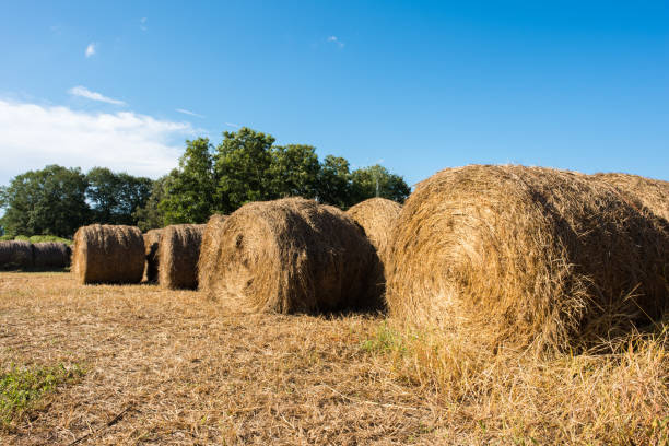 Hay bales in a pasture Close up of hay bale in a pasture in the rural area of Inman, South Carolina. apostate stock pictures, royalty-free photos & images