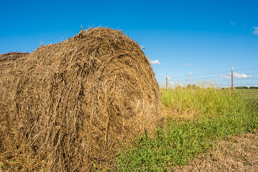 Hay Bales In A Pasture Stock Photo - Download Image Now