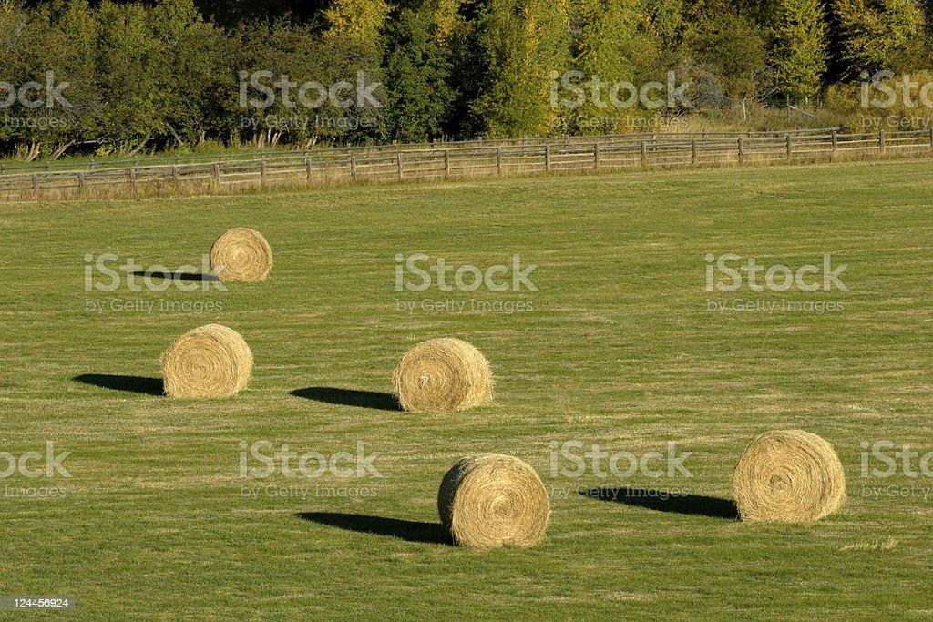 Hay Bales in Farm Field royalty-free stock photo