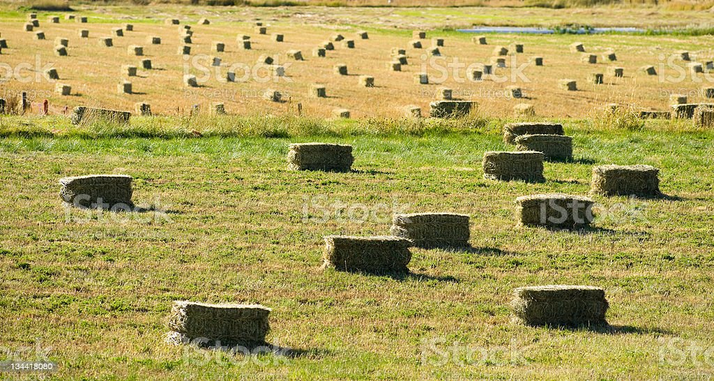 Hay Bales in Field on Ranch royalty-free stock photo