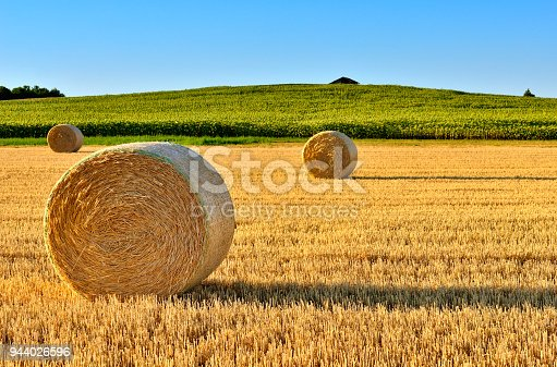 Golden colored hay bales in the valley at sunset.