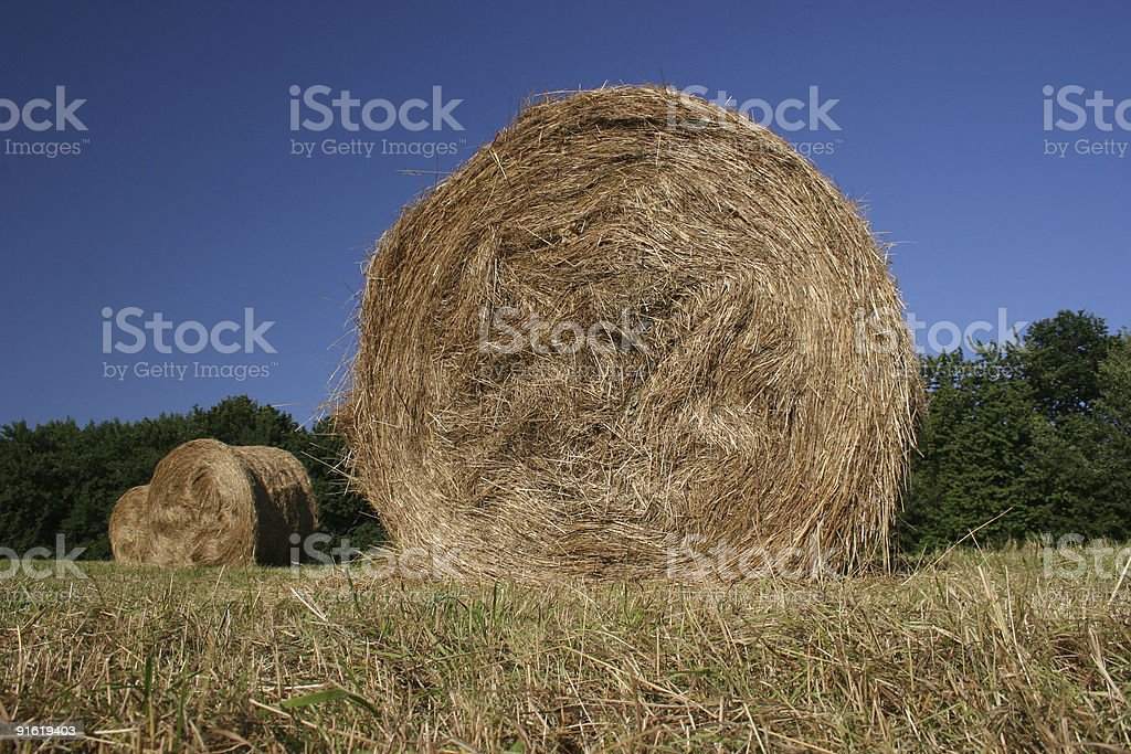 Hay bales in late summer stock photo