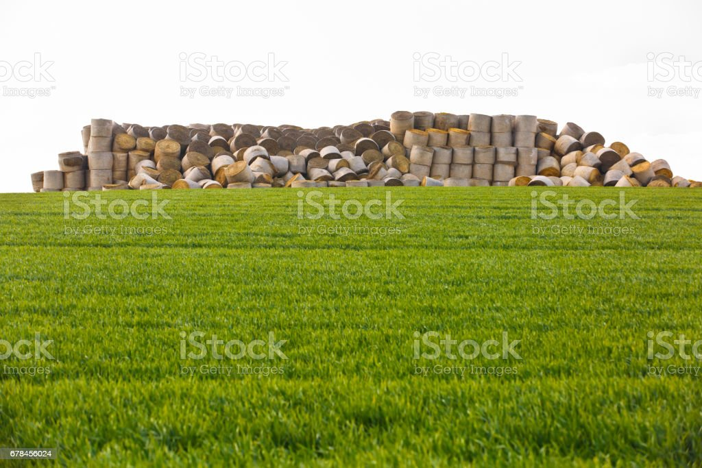 Hay bales in middle of the field royalty-free stock photo