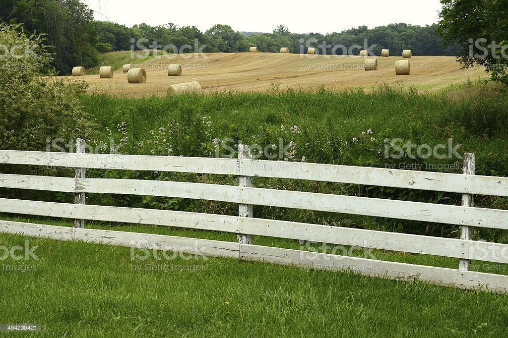 Hay Bales in the Field stock photo