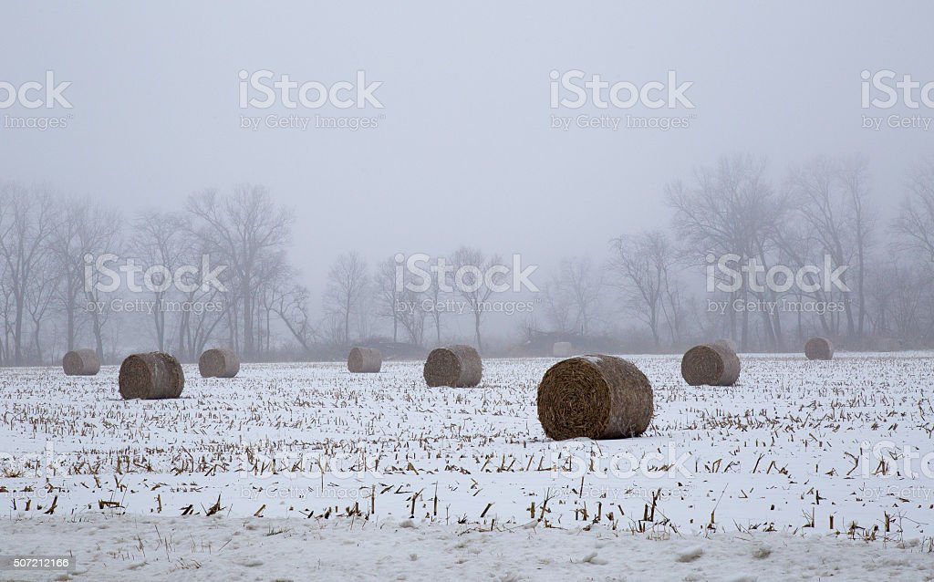 Hay Bales In The Fog In A Farm Field stock photo