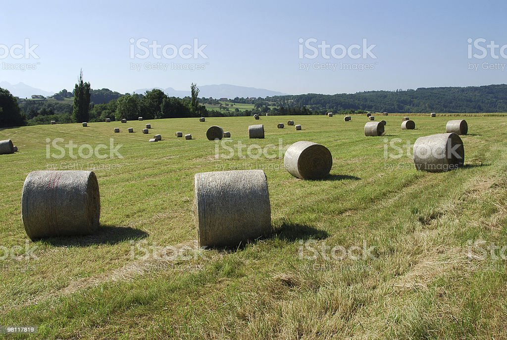 Hay bales in the morning royalty-free stock photo