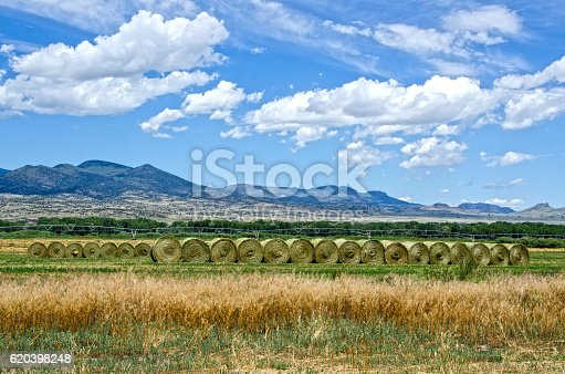 The San Luis Valley is known as the bread basket of Colorado, with agriculture producing potatoes, alfalfa, barley, lettuce, carrots and other vegetables.  Pictured here are round hay bales in a half-harvested field, with the Rocky Mountains in the background.