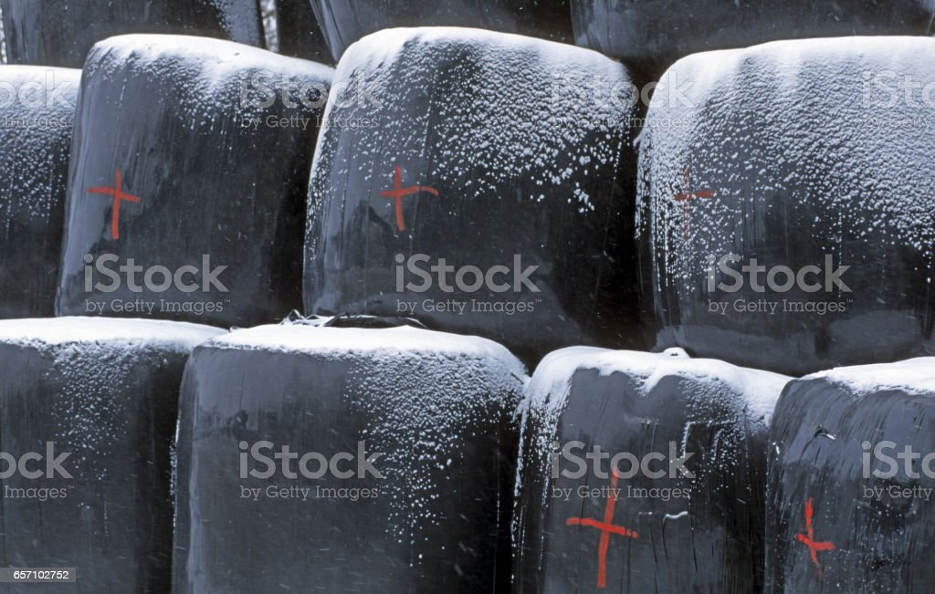 Hay bales in the winter stock photo