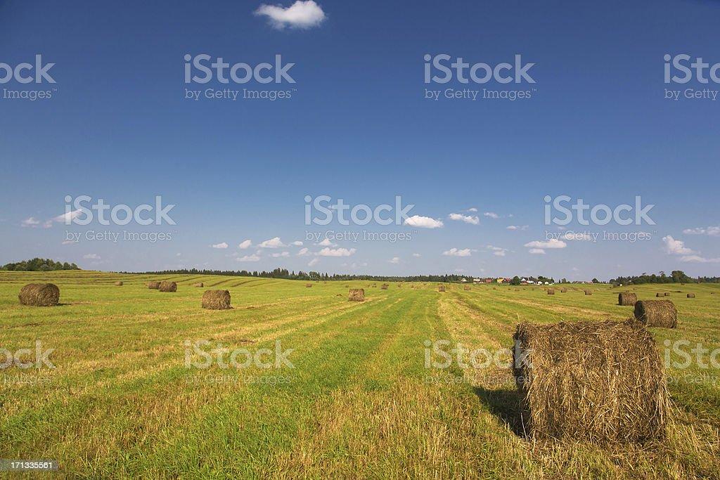 Hay bales an einem klaren Sommer Tag – Foto