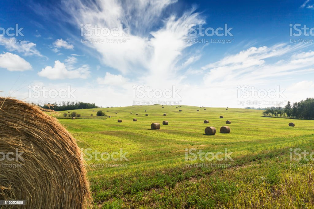 Hay bales on a field on a farm stock photo