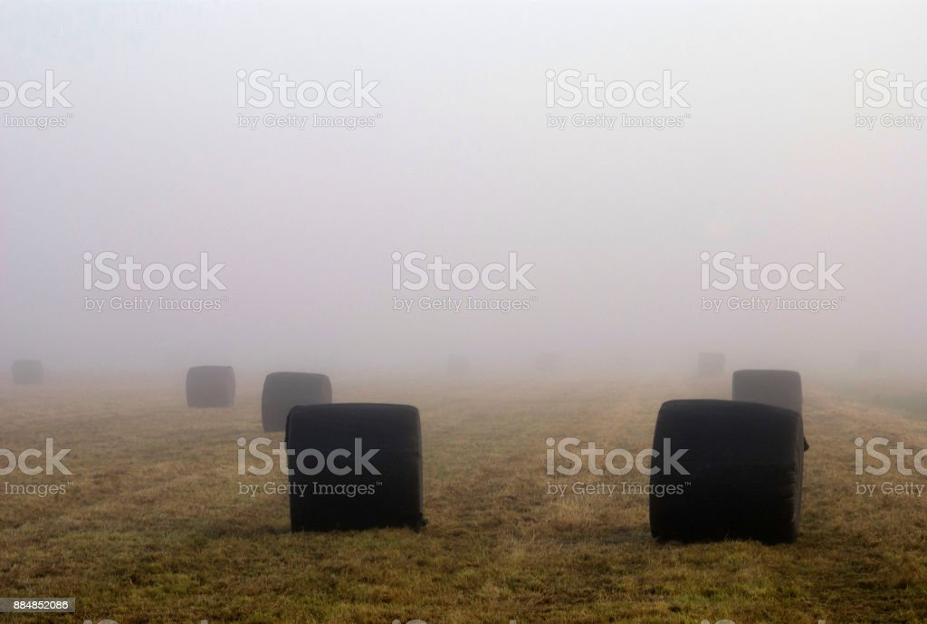 Hay bales on a field stock photo
