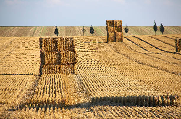 Hay bales on a late summer afternoon Hay bales on a late summer afternoon. monoculture stock pictures, royalty-free photos & images