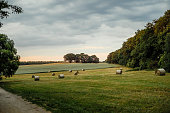 istock Hay bales on green field in sunset 1252759061