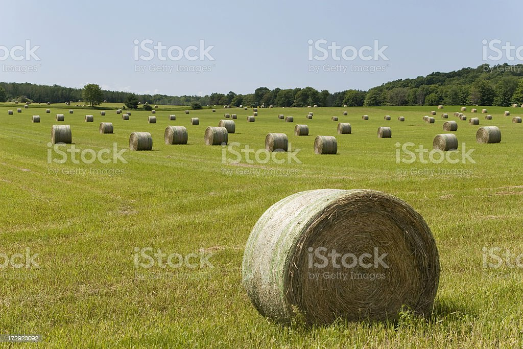 Hay Bales on Summer Day royalty-free stock photo