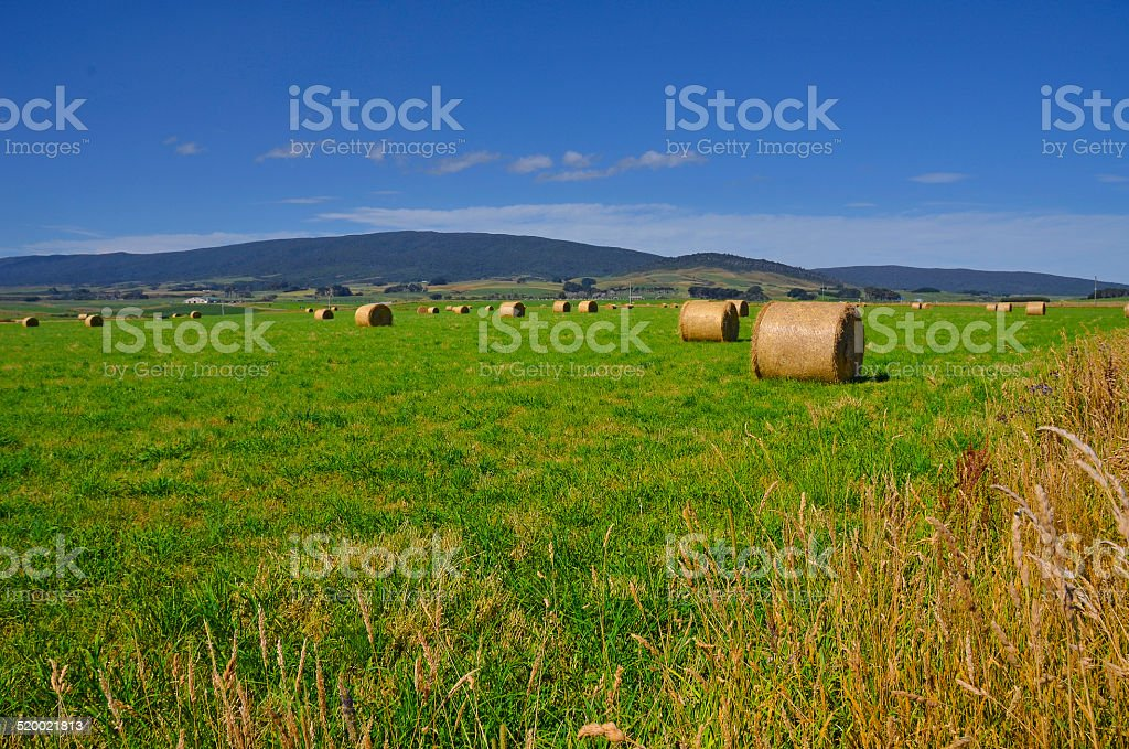 Hay bales, Southland, New Zealand stock photo