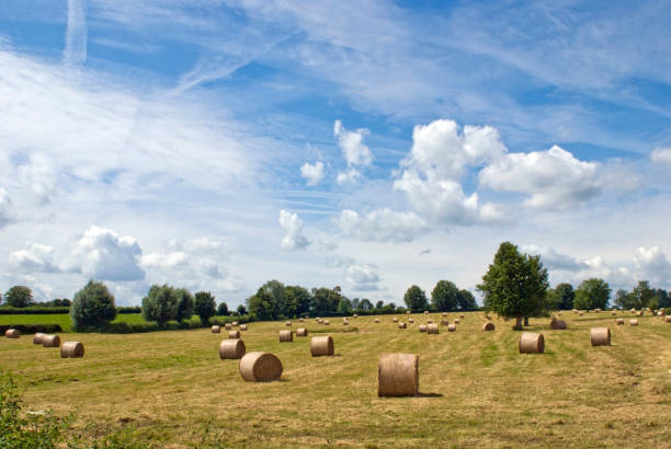 Hay bales under blue sky on a harvested field Hay bales under blue sky on a harvested field, Picardy, France, Europe. picardy stock pictures, royalty-free photos & images